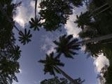 28-11-Panama-Scenic.jpg