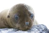 30-06_-_Baby_Seal.jpg