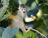 30-09_-_Squirrel_Monkey_1_XP.jpg