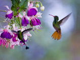 34-4-hummingbird.jpg