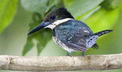 34-6-Kingfisher.jpg