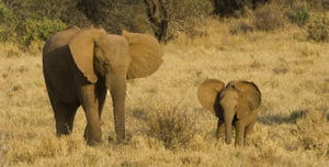 35-7-elephants.jpg