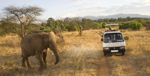 35-8-elephantandvan.jpg