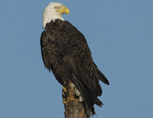 36-12-Eagle0031.jpg