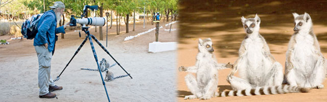 49_Photographergettingphotoadvice&Lemurs.jpg
