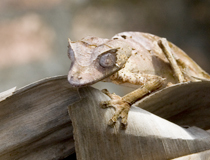 50_Gecko-Lizard.jpg