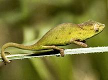 50_chameleon.jpg