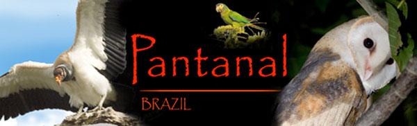 52-Pantanal-Header.jpg