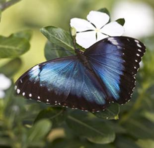 52_Butterfly.jpg