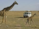 52_Safari2.jpg