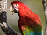 53_03_Red-and-Green-Macaw.jpg