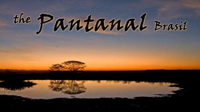 53_PantanalHeader.jpg