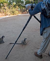 54_LemursPosing.jpg