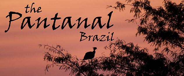 54_PantanalHeader.jpg