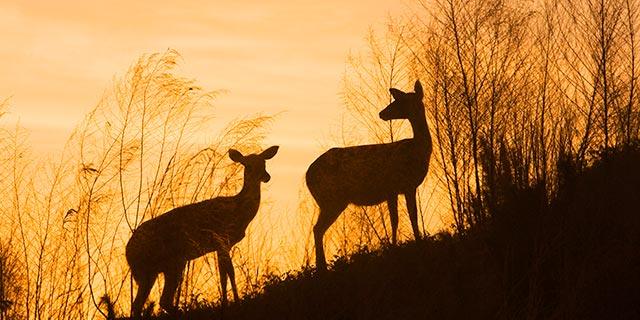 55_DeerSilo.jpg
