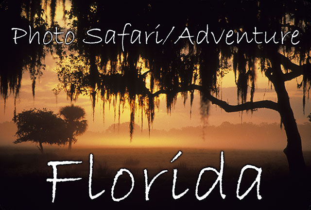 55_FloridaHeader.jpg