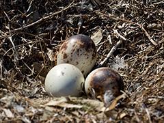 57_Nest.jpg