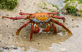 59_crab.jpg