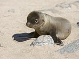61_04-Baby-Sea-Lion.jpg