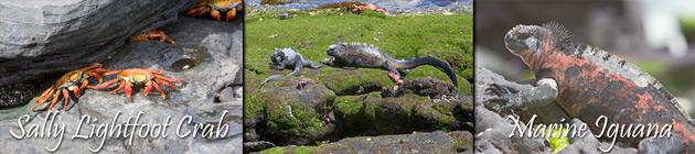 61_Crabs-and-Iguanas.jpg