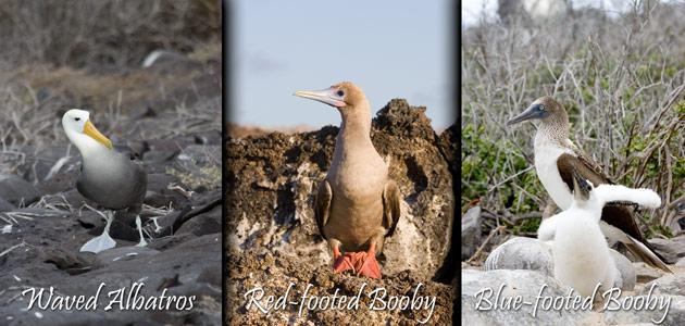 61_Galapagos-Birds.jpg