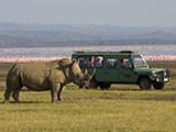 63_01 RhinoTour.jpg