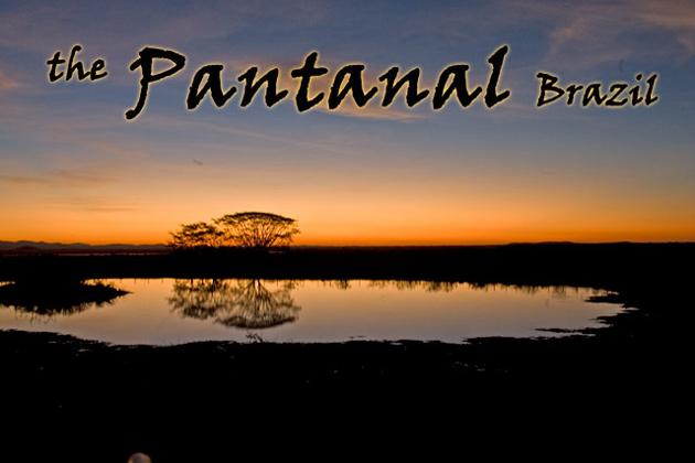 64_PantanalHeader.jpg