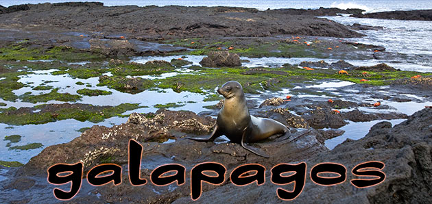64_galapagosheader.jpg