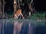 65_05_Deer.jpg