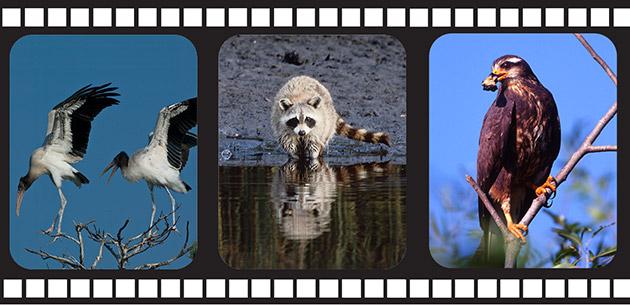 65_FloridaFilmStrip-2.jpg