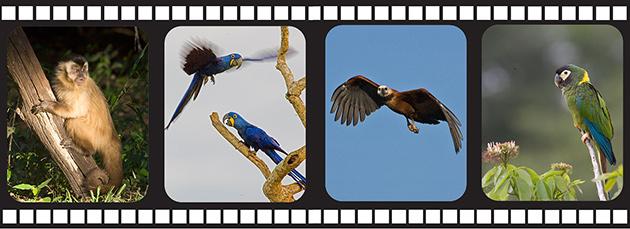 65_PantanalFilmStrip.jpg