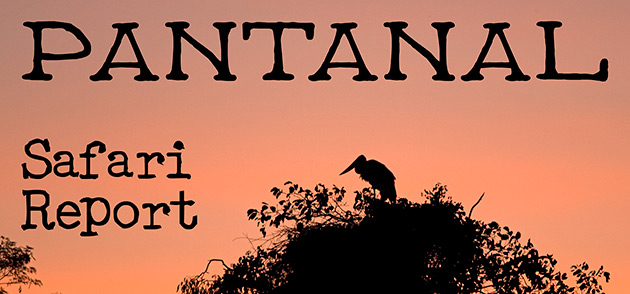 65_Pantanal_Header.jpg