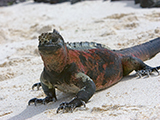 67_04_marine-iguana.jpg