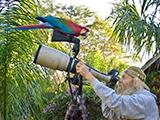 67_08_Macaw.jpg