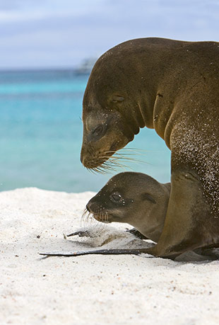 67_Galapagos-Sea Lion.jpg