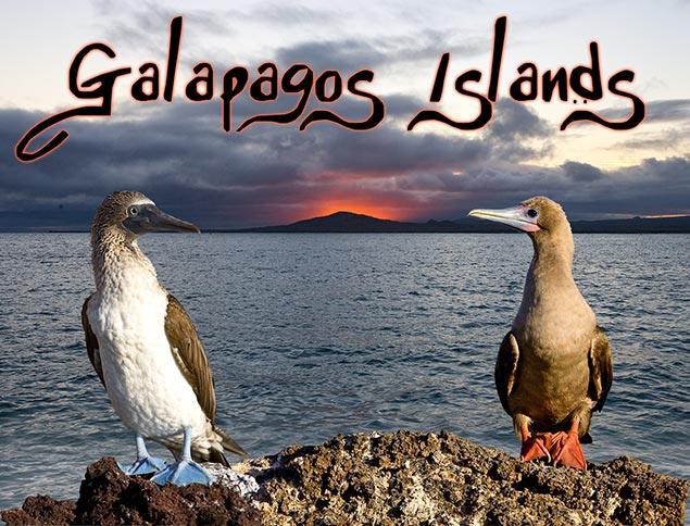67_Galapagos-header.jpg