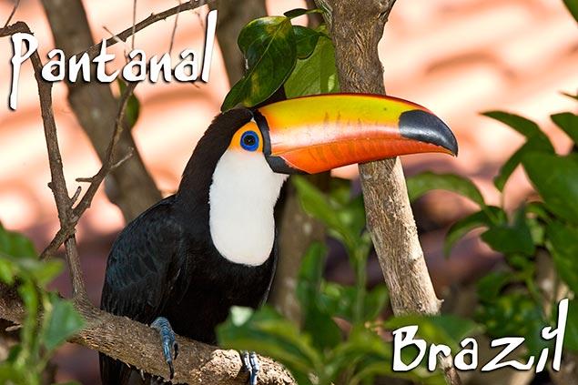 67_Pantanal-header.jpg