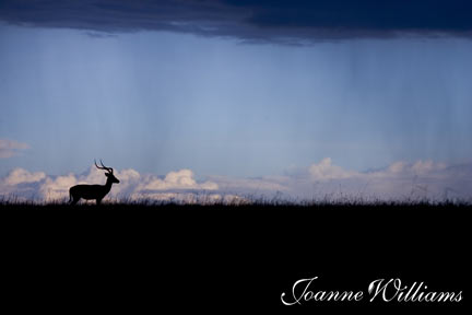 Antelope-with-Storm.jpg