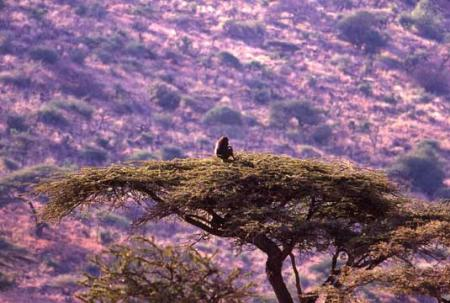 Baboon-in-Tree.jpg