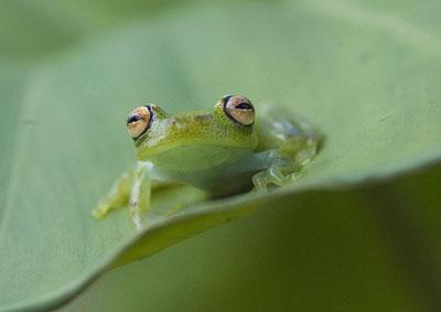 Frog-E1119.jpg