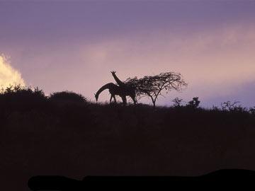Giraffe-Silhouette.jpg