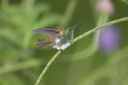 Humming-Bird-11.jpg
