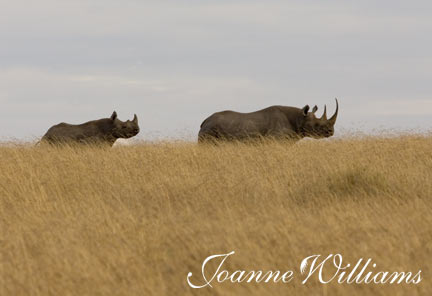 Mother-and-Baby-Rhino.jpg