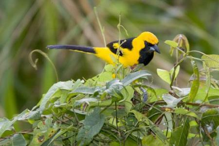 Panama-Bird-3.jpg