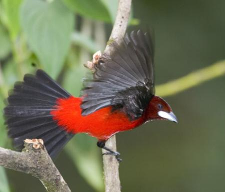 Panama-Bird-6.jpg