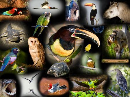 Pantanal-Poster-II.jpg