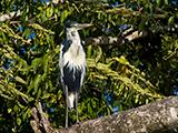 Pantanal Photography Tours