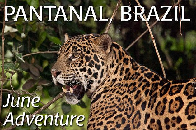 Pantanal Photo Workshops