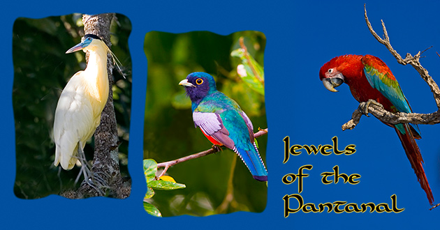 Pantanal Bird Photos
