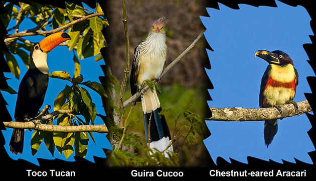 Pantanal Brazil Photos